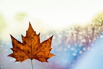 frosty winter leaf