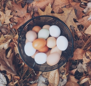 eggs-basket